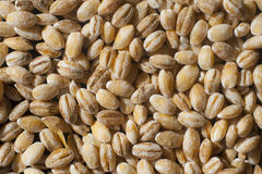 Pearl barley groats close-up. Close-up of pearl barley groats - food background Stock Photo