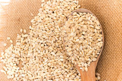 Pearl barley Stock Photography