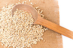 Pearl barley Royalty Free Stock Photography