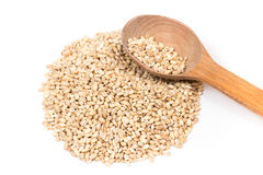 Pearl barley Royalty Free Stock Photo