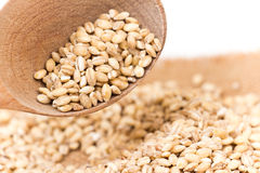 Pearl barley Stock Photo