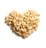 Pearl barley heart form Stock Images