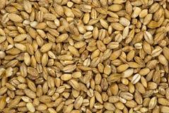 Pearl barley macro background Stock Photo