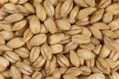 Pearl Barley Stock Photos