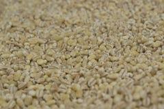 Pearl barley Stock Photography