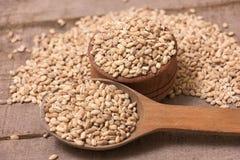 Pearl barley Stock Images