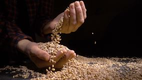 Pearl barley spilling on burlap.  stock video footage