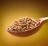 Pearl barley in a wooden spoon Royalty Free Stock Photography