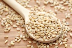 Pearl barley in a wooden spoon Stock Photos