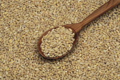 Pearl barley in a wooden spoon Stock Image