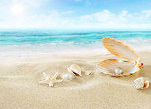 Pearl on the beach. Royalty Free Stock Photography