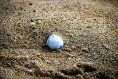 Pearl on the beach sand stock photos