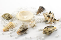 Pearl beads and seashells Royalty Free Stock Images