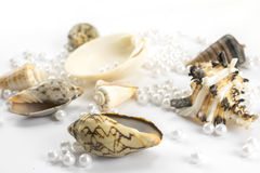 Pearl beads and seashells Royalty Free Stock Photography