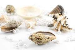 Pearl beads and seashells Royalty Free Stock Image
