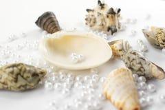 Pearl beads and seashells Royalty Free Stock Photos