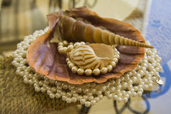 Pearl bracelet or necklace and shells Royalty Free Stock Photos