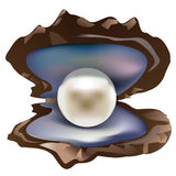 Pearl clams illustration Royalty Free Stock Photography