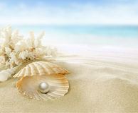 Pearl in coral reef royalty free stock photos
