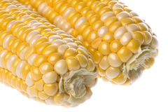 Pearl Corn Isolated Royalty Free Stock Image
