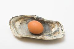 Pearl egg. Egg in a shell like a pearl royalty free stock image