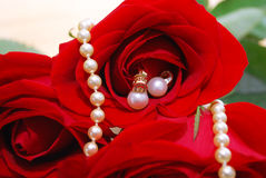 Pearl jewelry set in red roses stock image