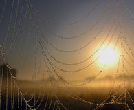Pearl laces. Sunrise with a close-up spider web with pearls Royalty Free Stock Images