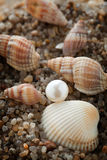 Pearl lies on sand with cockleshells Royalty Free Stock Photos