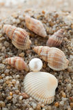 Pearl lies on sand with cockleshells Royalty Free Stock Image