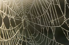 Pearl-like dew drops on a web Royalty Free Stock Photography