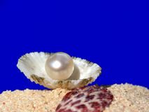 Pearl macro image with shell Stock Photo