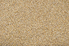 Pearl Millet Royalty Free Stock Images
