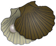 Pearl Mussel shells Royalty Free Stock Photography