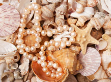 Pearl nacklace on a sea shell background Stock Photos