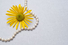 Pearl Necklace and Daisy Background Royalty Free Stock Photos