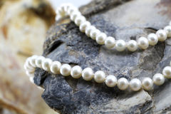 Pearl necklace, upon a fossil oyster shell. A composition with a pearl necklace, upon a fossil oyster shell, detail, another oyster shell blurred on the Royalty Free Stock Image