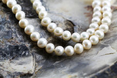 Pearl necklace, upon a fossil oyster shell. A composition with a pearl necklace, upon a fossil oyster shell, detail, landscape cut Royalty Free Stock Images