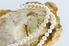 Pearl necklace, upon a fossil oyster shell. A composition with a pearl necklace, upon a fossil oyster shell, landscape cut Royalty Free Stock Photos