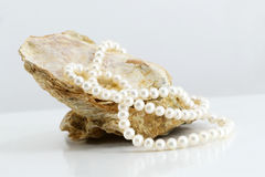 Pearl necklace, upon a fossil oyster shell. A composition with a pearl necklace, upon a fossil oyster shell, landscape cut Stock Photo