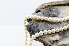 Pearl necklace, upon a fossil oyster shell. A composition with a pearl necklace, upon a fossil oyster shell, space for text on the left, landscape cut Royalty Free Stock Images