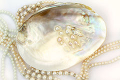 Pearl necklace with natural pearls in a oyster shell Stock Photos