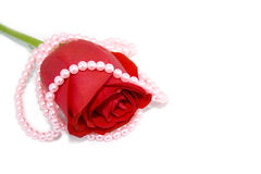 Pearl necklace over the red rose Stock Images