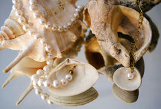 Pearl necklace over shells Royalty Free Stock Image