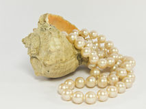 Pearl necklace with a sea shell Stock Images