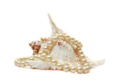 Pearl necklace with shell Royalty Free Stock Photo