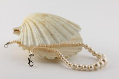 Pearl with a shell Royalty Free Stock Photos