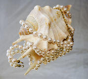 Pearl necklace on shell Stock Photos