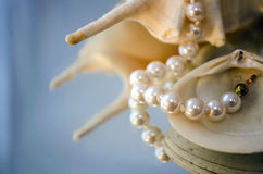 Pearl necklace and shells Royalty Free Stock Photography
