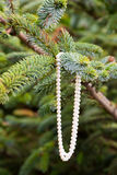 Pearl Necklace in Tree Royalty Free Stock Photography