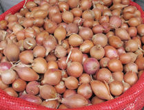 Pearl onion Royalty Free Stock Image